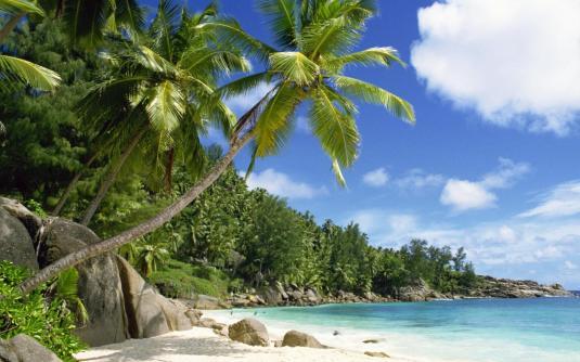 Rocky-Sea-Coconut-trees-Beach-Seychelles