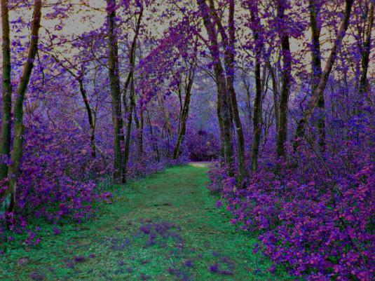 fairy_forest_by_heavenation05.jpg